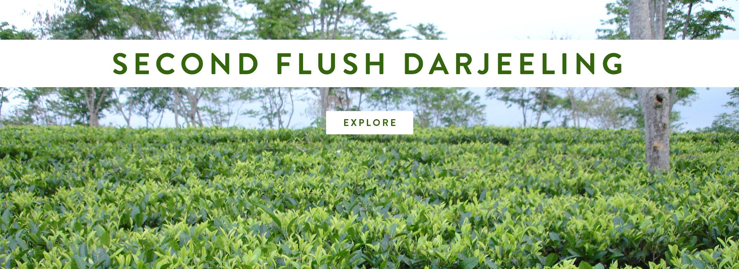 Second Flush Darjeeling